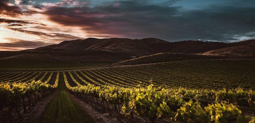 inteligencia artificial en el sector vinicola